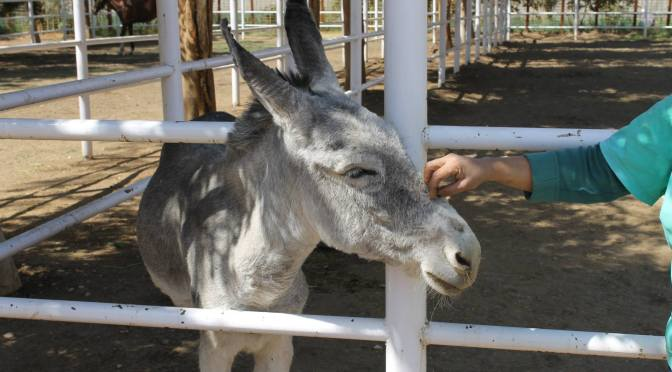 Egypt's Animals Find a Home in Luxor
