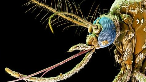_73783121_z3410218-coloured_sem_of_head_of_mosquito,_aedes_aegypti-spl