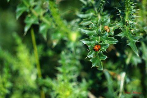 symbol of fortune ladybug