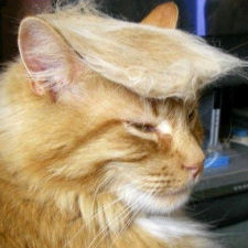 Trump Your Cat – Anyone Can Join the Race