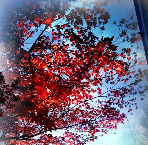 red-fall