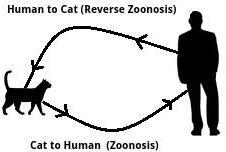 Reverse%2Bzoonosis.jpeg