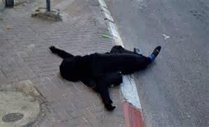 سماح مبارك…. ولوم الضحية