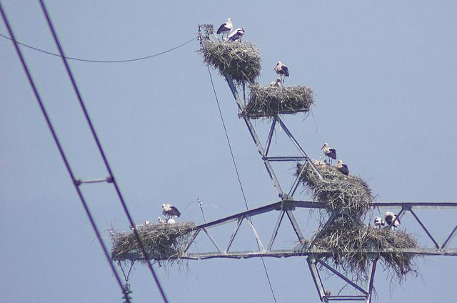 stork+nest+18.jpg