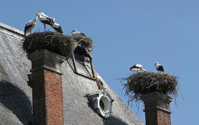 stork+nest+3.jpg