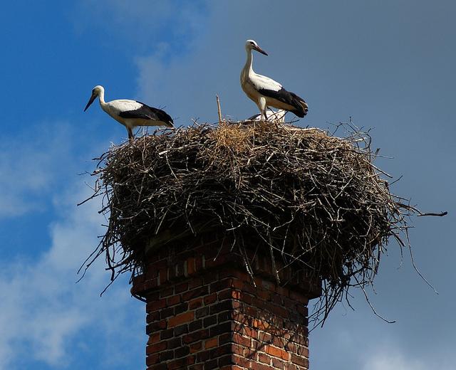 stork+nest+16.jpg