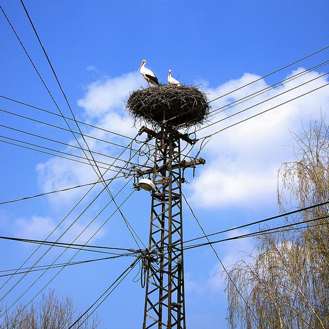 stork+nest+11.jpg