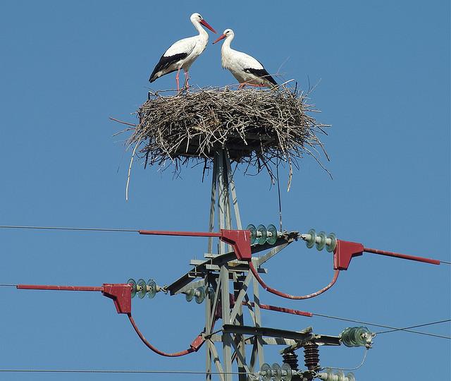stork+nest+5.jpg