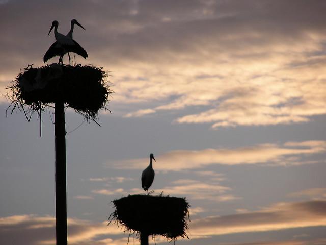 stork+nest+12.jpg