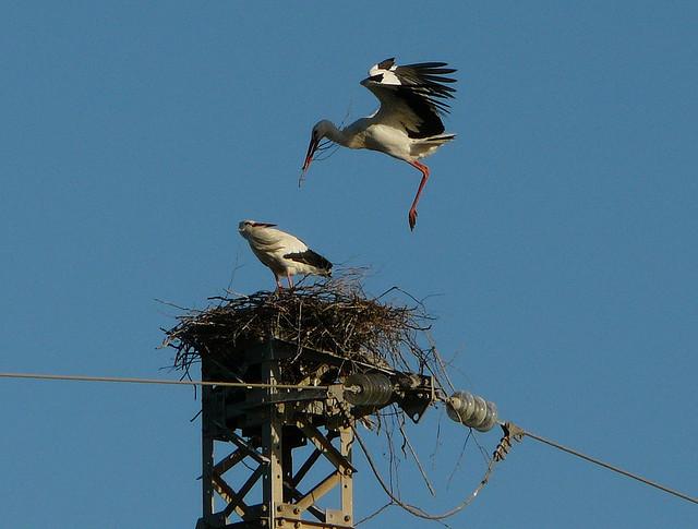 stork+nest+7.jpg
