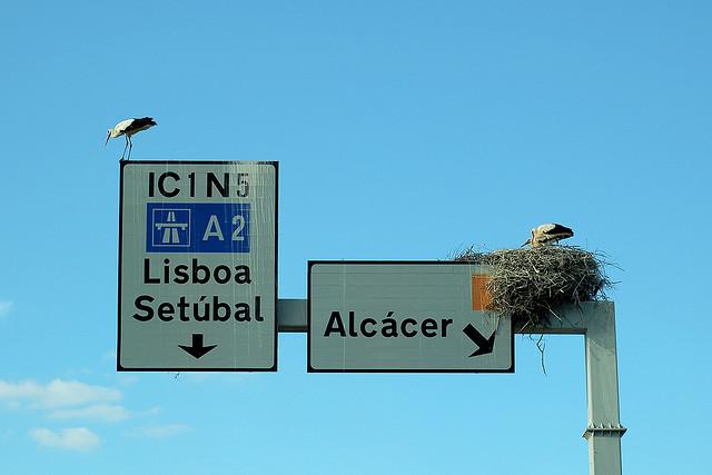 stork+nest+17.jpg