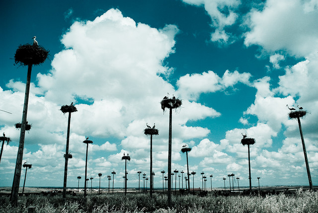 stork+nest+9.jpg