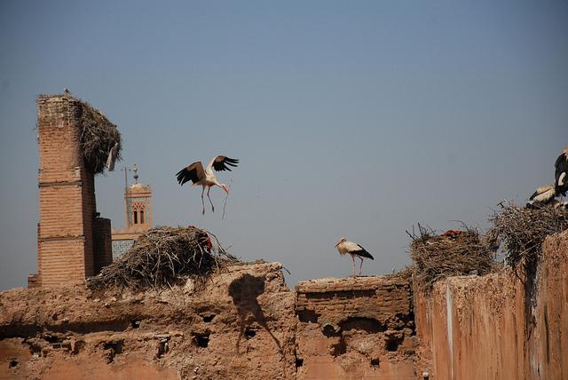 stork+nest+13.jpg