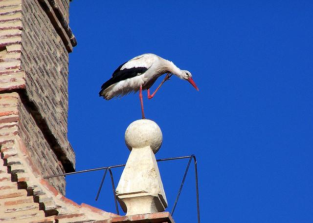 stork+nest+4.jpg