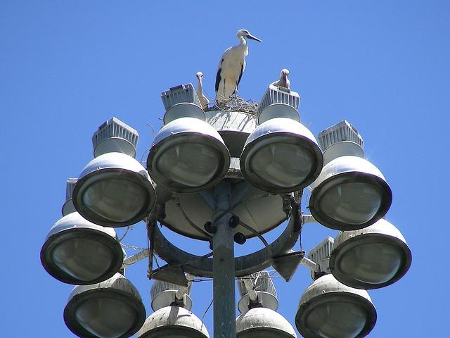 stork+nest+15.jpg