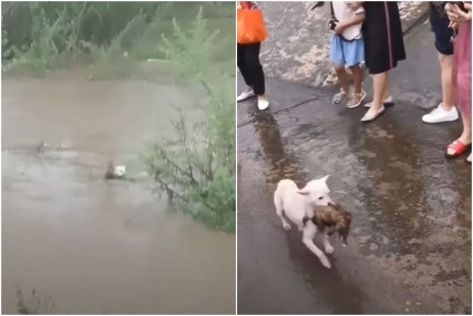 The mother dog jumped into Minjiang River, in Sichuan Province, after police dissuaded human rescuers from trying to retrieve the two puppies as the risk was too high.