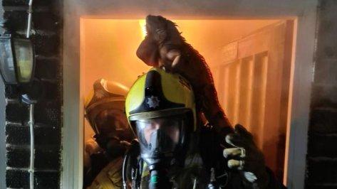 Iguana on a firefighter's head