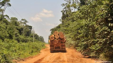 A flatbed truck driving down a dirt road in the Amazon carrying several trees.