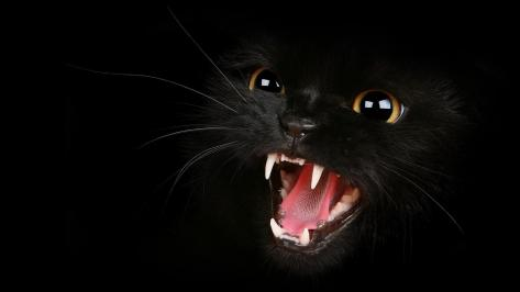 wallpaper et fond d'écran chat noir cat miaule rugir animals animaux félin