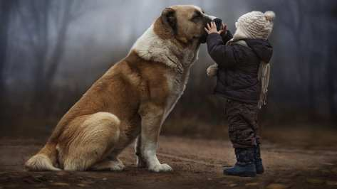 wallpaper et fond d'écran Tendre amitié enfant chien dog child tendresse complicité animals animaux Tender friendship