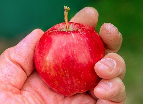 apple-3632467__340