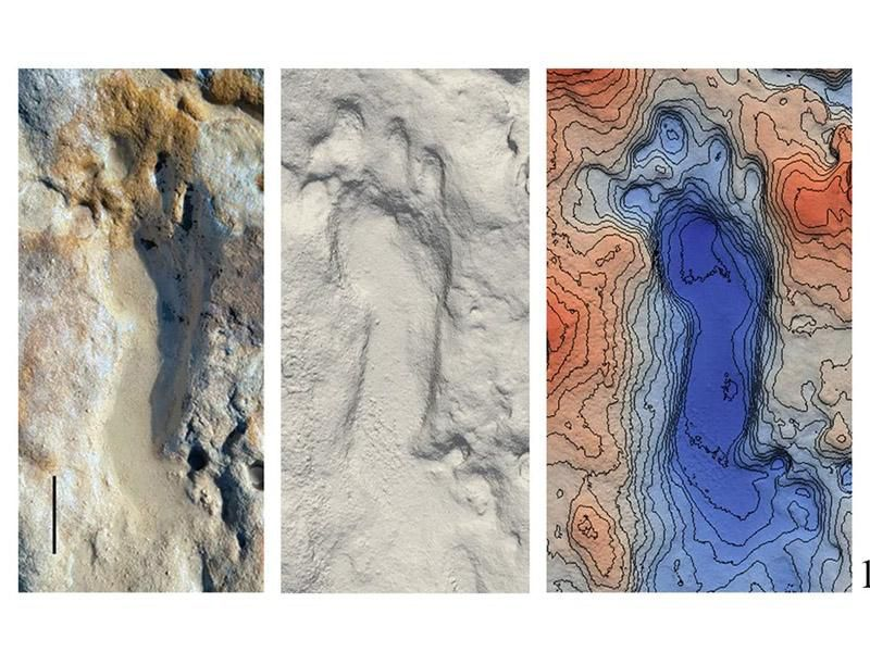 Fossilized Neanderthal footprint