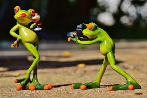 wallpaper et fond d'écran drôle de grenouille funny frog animals animaux humour humor amusant photo photographie picture image