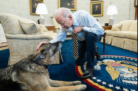 President Joe Biden pets the Biden family dog Champ in the Oval Office of the White House on Feb. 24. File photo courtesy of the White House.