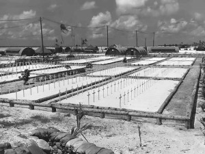 One of the cemeteries at Tarawa.