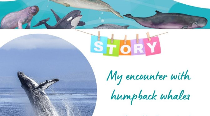 A Tale of Three Whales: My Humpback Encounter