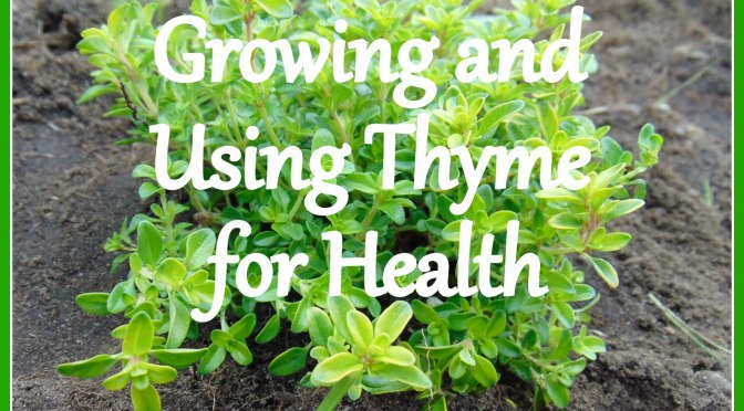 Growing And Using Thyme for Health