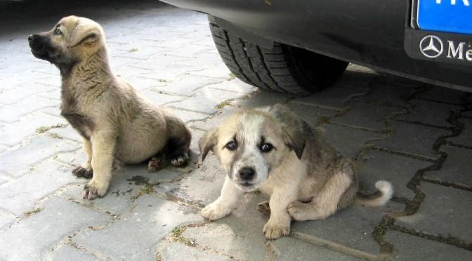 Der Hund, der beste Freund des Menschen in aller Welt