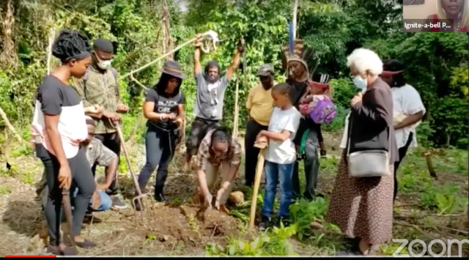 Caribbean Tree Planting Week: A Cultural Celebration of Trees