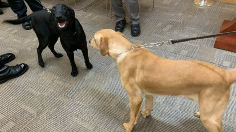 COVID-19 sniffing dogs being deployed in Massachusetts