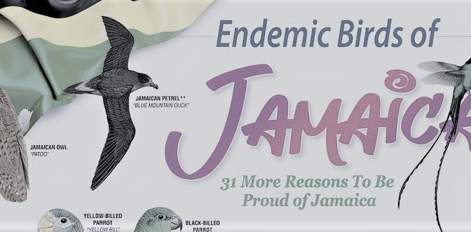 31 Reasons to be proud: Join the virtual launch of BirdLife Jamaica's Endemic Bird Poster on July 25