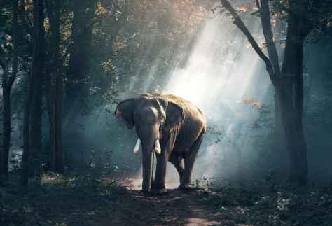 wallpaper et fond d'écran éléphant elephant animals animaux forêt nature beau beautiful paysage afrique savane photo photographie photography