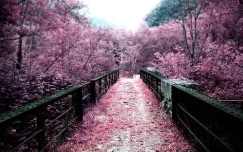 wallpaper et fond d'écran nature rose pink paysage fleuri fleurs flowers sakura Japonais jardin magnifique landscape photo photographie photography beau beautiful