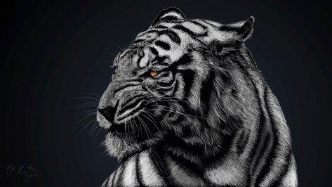wallpaper et fond d'écran tigre noir & blanc tiger félin feline animals animaux graphique black and white portrait photo photographie photography