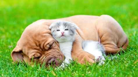wallpaper et fond d'écran amour chien chaton dog kitten complice animals animaux mignon cute animals domestique photo photographie photography