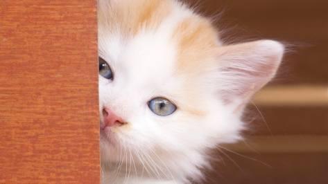 wallpaper et fond d'écran chaton caché kitten hidden chat cat mignon cute beau beautiful félin animals domestique compagnie animaux photo portrait photographie photography