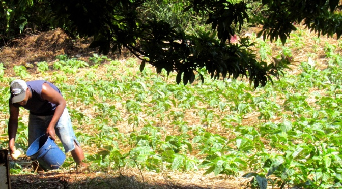 Jamaica undertakes major assessment of its food systems ahead of global UN Food Systems Summit