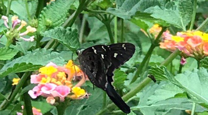 Running with Butterflies