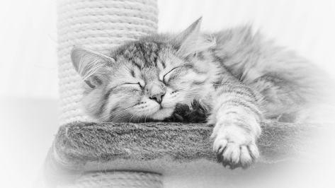 wallpaper et fond d'écran chat cat sleep sommeil repos dormir mignon cute animals animaux noir et blanc black and white photo photographie photography